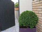 Záhrada - po úprave